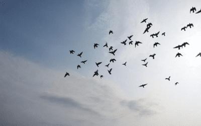 What is Ignatian leadership?